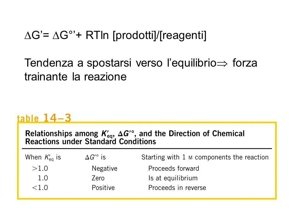 DG'= DG°'+ RTln [prodotti]/[reagenti]